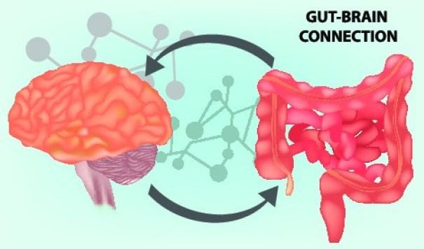 La connessione tra intestino e cervello rappresenta una delle conquiste di una nuova disciplina quale la gastro-neuro-endocrinologia.