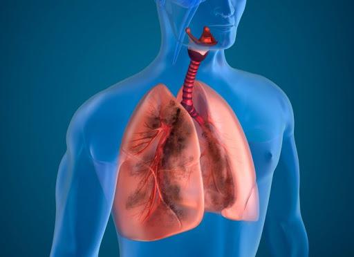 Il microbiota polmonare è stato fino ad oggi poco indagato