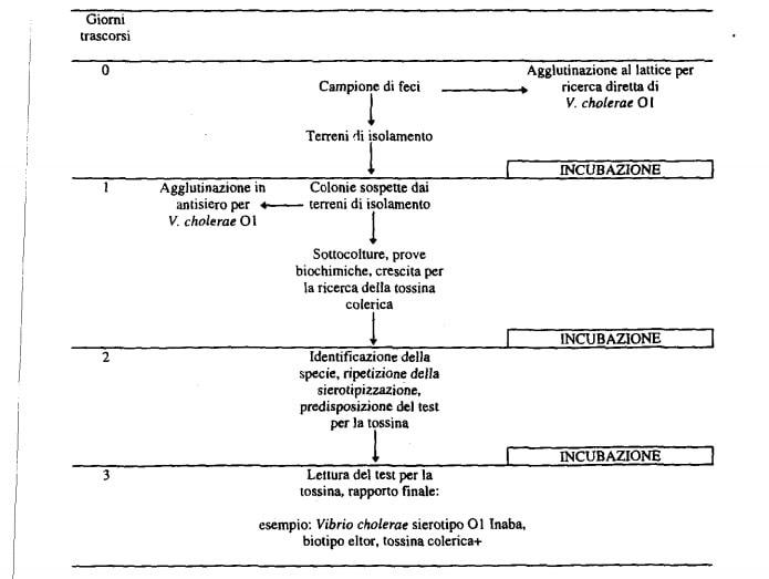 protocollo identificazione