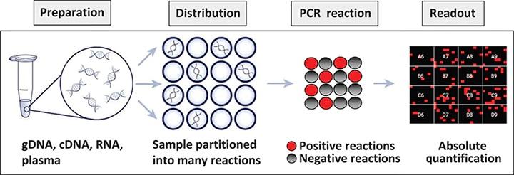 PCR: dPCR