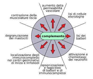 Sintesi delle diverse funzioni svolte dal sistema del complemento