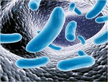 Microbiota umano