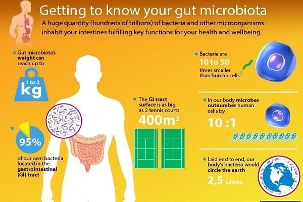 quantità del microbiota umano