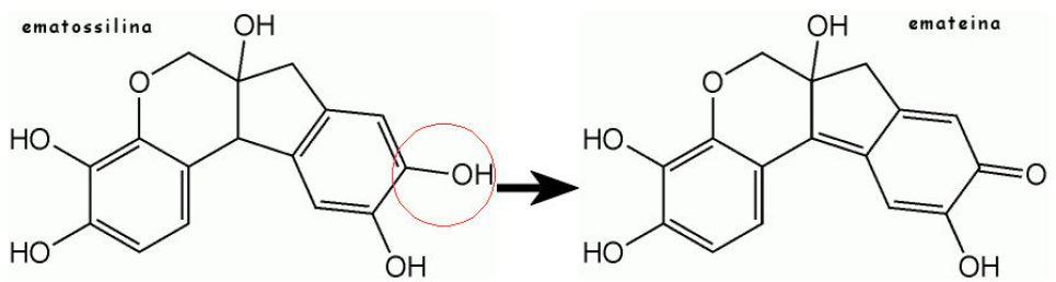 Ossidazione dell'ematossilina ad emateina (struttura chimica)