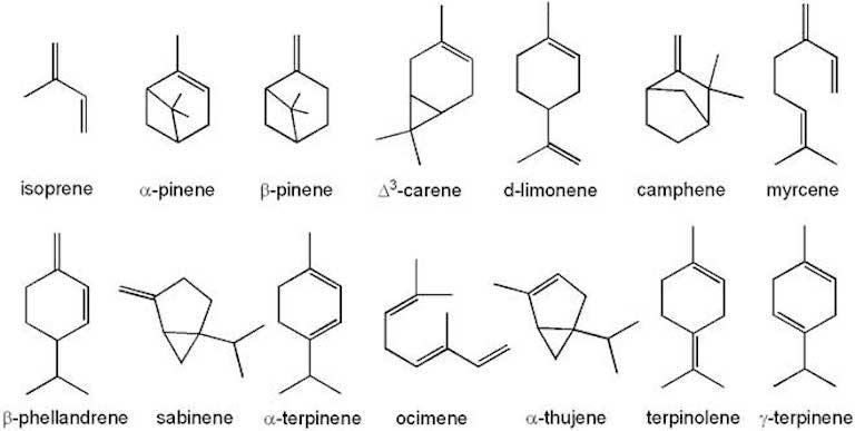 Strutture chimiche di vari terpeni