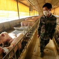 Nuovo ceppo influenzale con potenziale pandemico dalla Cina