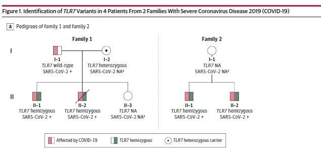 Schema dell'ereditarietà delle varianti alleliche del gene TLR7 nelle due famiglie analizzate