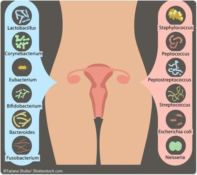 microbiota vaginale