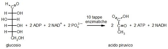 Equazione globale della glicolisi