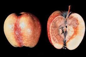 patuline nella frutta