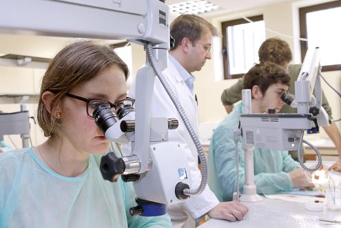 IV edición curso de microcirugía experimental