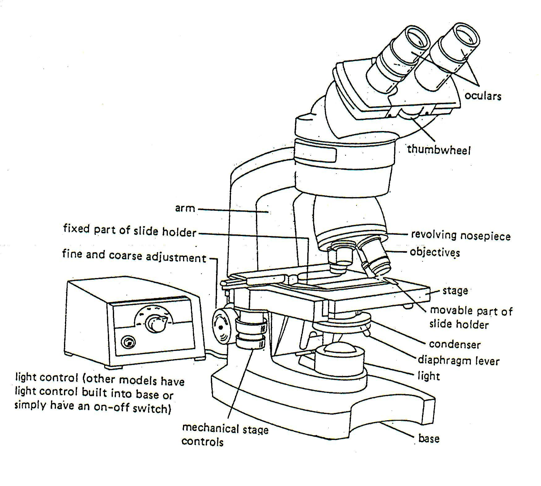 Microscope Parts Coloring Pages Sketch Coloring Page
