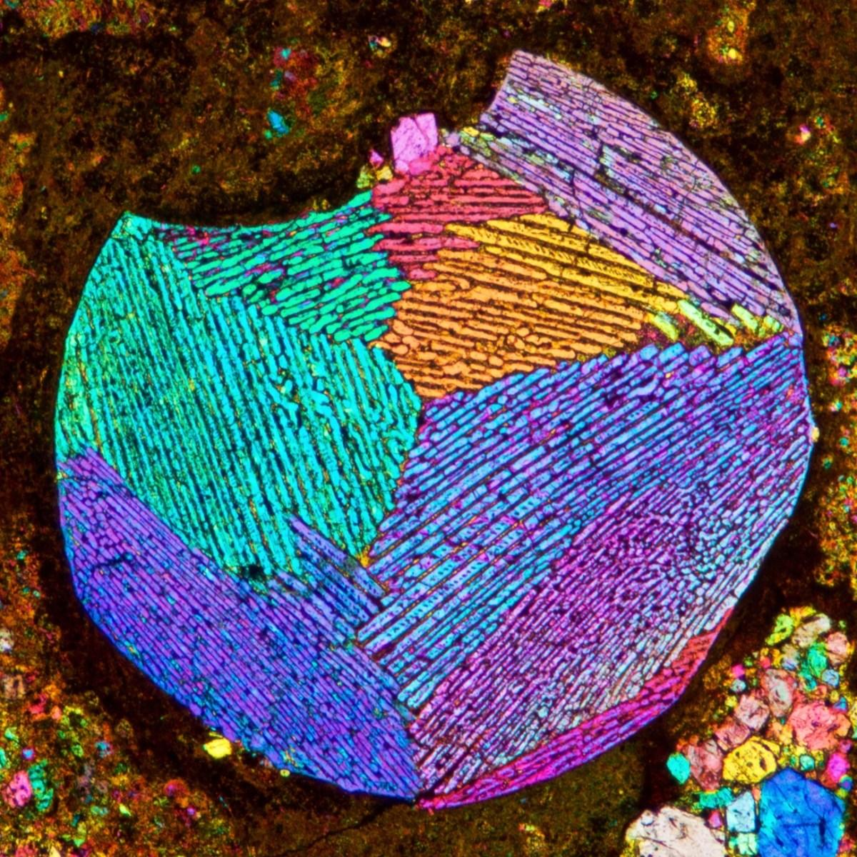Microscopy Today Micrograph Awards Gallery 2020 | Microscopy Society of  America