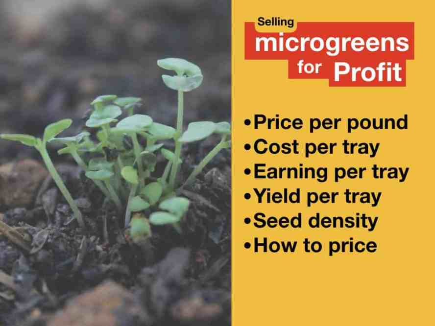 Selling Microgreens For Profit — [price, expenses, seed desity