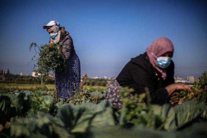 Palestinian farmers in Gaza Strip