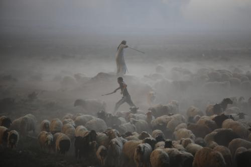 Civilians protect their herd from smoke as the battle for control over Mosul continues. 18th October 2016. [file copy]