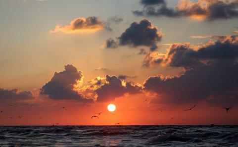 GAZA CITY, GAZA - JANUARY 04: Birds fly over Gaza's beach during a sunset in Gaza City, Gaza on January 04, 2017. ( Yasser Qudih - Anadolu Agency )