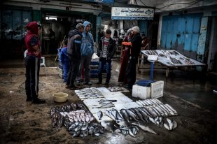 Palestinian fishermen sell fish at a fish market in Al-Shati camp, after 11 tonnes of fish was brought into Gaza following the temporary opening of the Rafah border by Egyptian authorities, in Gaza on February 13, 2017. (Ali Jadallah - Anadolu Agency)