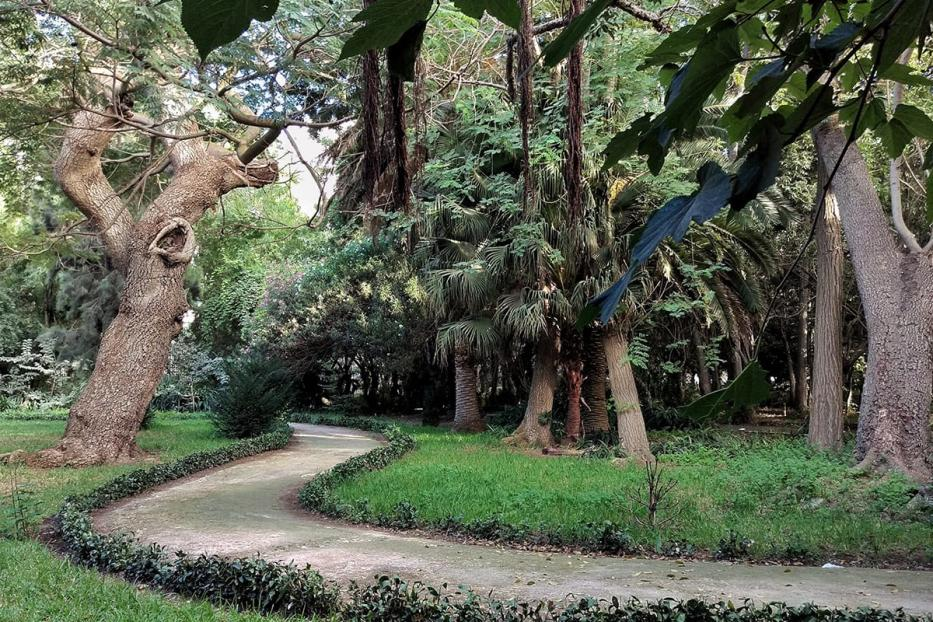 Image of the many trees found in Botanical Garden of El Hamma in Algiers, Algeria
