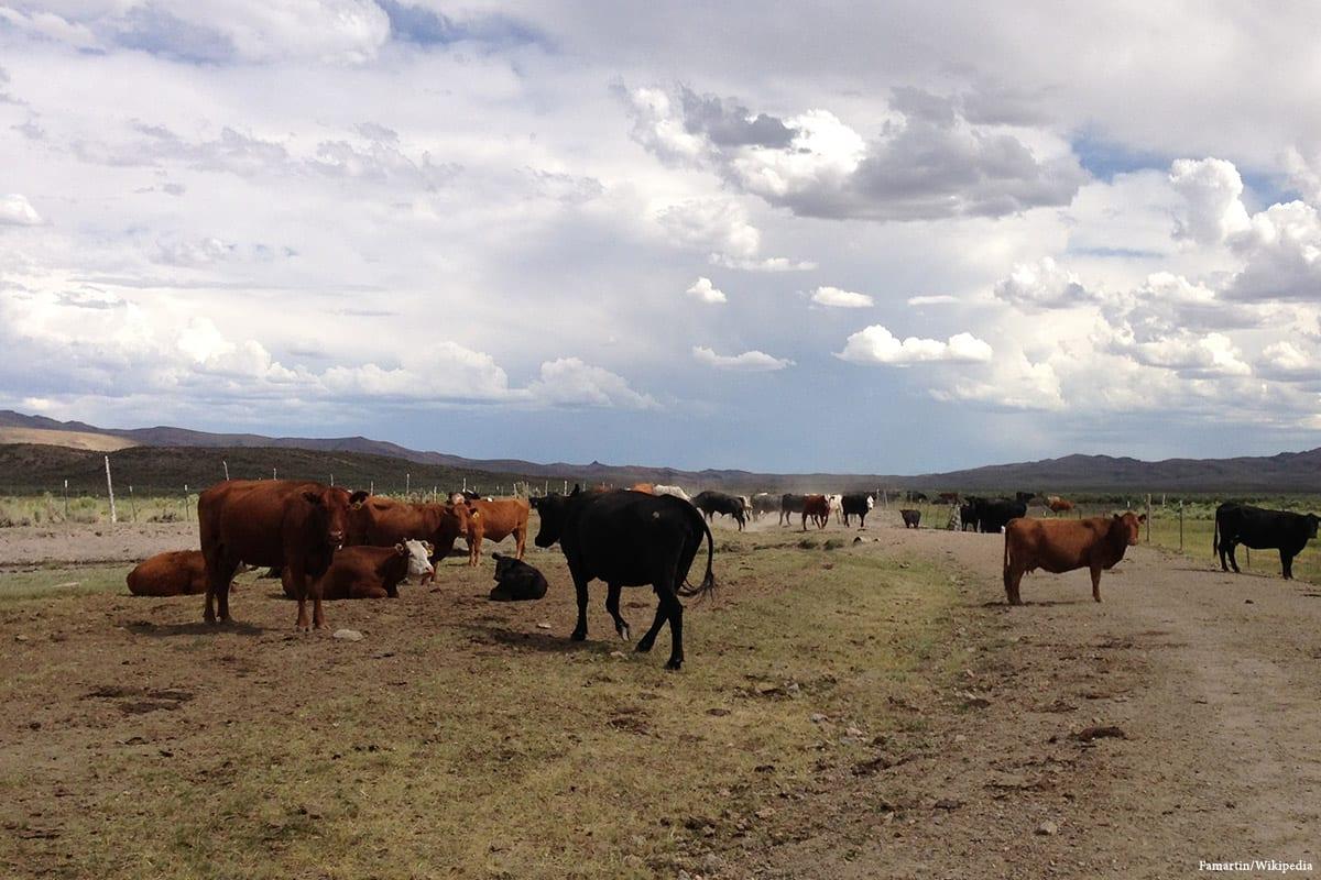 File photo of a cattle farm [Famartin/Wikipedia]