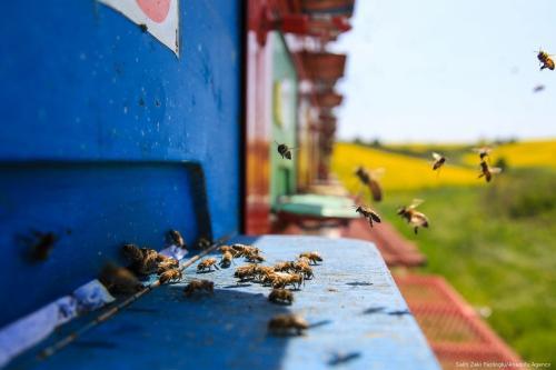 A Turkish man produces natural honey with bees in a lorry in Istanbul, Turkey on 4 May 2017 [Salih Zeki Fazlıoğlu/Anadolu Agency]