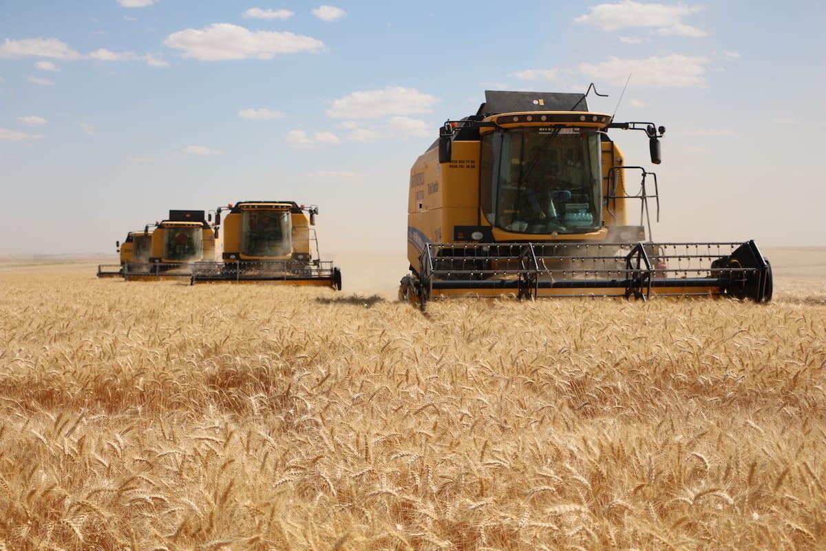 Wheat is harvested on 18 June 2017 [Halil Fidan/Anadolu Agency]