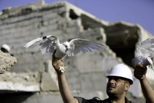 A man, member of Syrian civil defense organization, White Helmets lets a white pigeon to fly for people who lost his life in chemical attack that in the Eastern Ghouta region of Damascus, Syria on 22 August, 2017 [Amer Almohibany/Anadolu Agency]