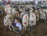 "Sellers wait with sacrificial animals for the customers at a livestock market ahead of the upcoming Muslim sacrificial festival ""Eid al-Adha in Sanliurfa, Turkey on 18 August, 2017 [Halil Fidan/Anadolu Agency]"