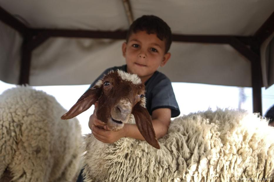 A Palestinian child poses with the livestock that will be given to feed the poor and needy on Eid day on 25 August 2017 in Gaza City on 25 August 2017 [Ali Jadallah/Anadolu Agency]