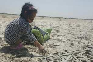 Dead fish accumulate on the beach after the river becomes inhabitable in the Ahwazi region of Iran [Rahim Ahwaz]