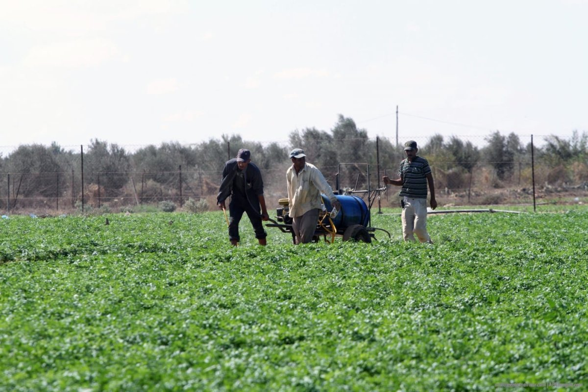 Agriculture farmers in Gaza. [File photo: APAimages]