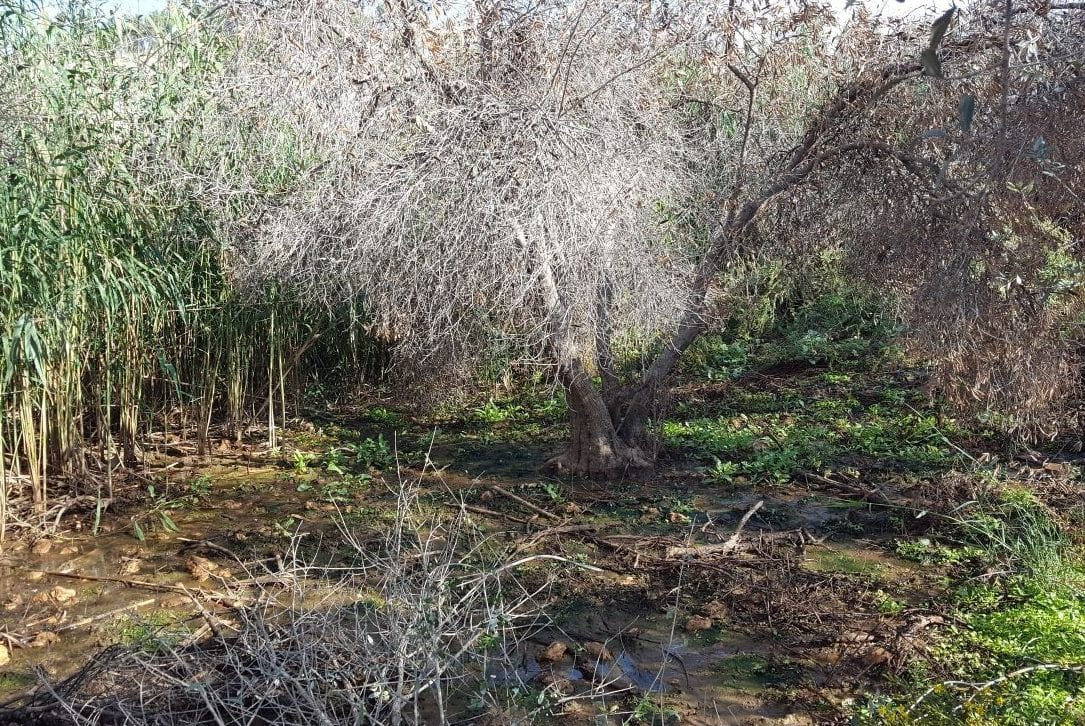 Palestinian farmers in Deir Al-Hatib discovered sewage run-off from the illegal settlement Elon Moreh had killed their olive trees and other crops on 24 October 2017. [Rabbis for Human rights/Twitter]