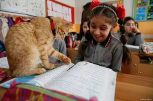 'Tombi', known as the classroom cat, can be seen interacting with children in a primary school in Izmir, Turkey [Evren Atalay/Anadolu Agency]
