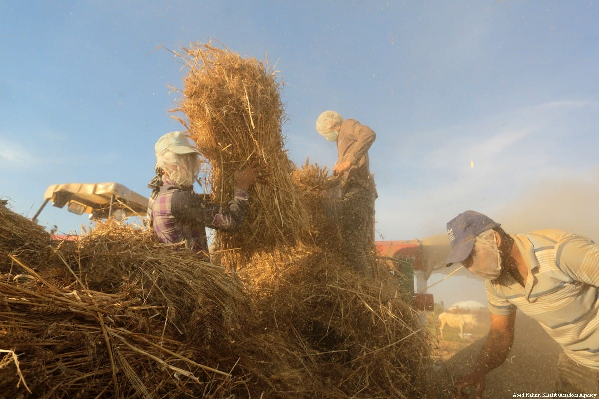 Farmers separate wheat and straw bundles on 16 May 2018 [Abed Rahim Khatib/Anadolu Agency]