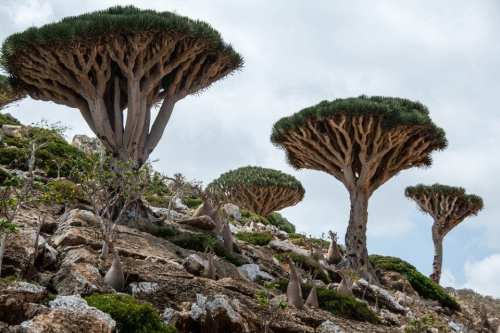 Socotra Islands in the Arabian Sea [Wikipedia]