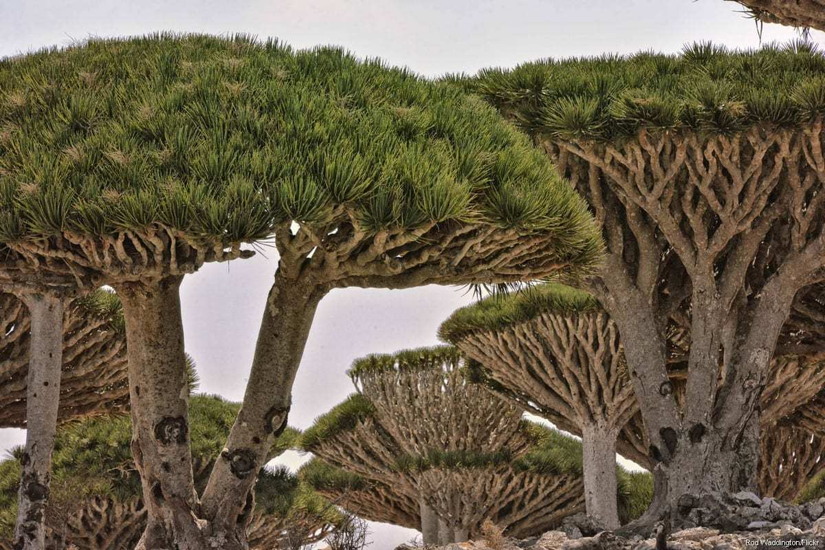 The Yemeni island of Socotra [Rod Waddington/Flickr]