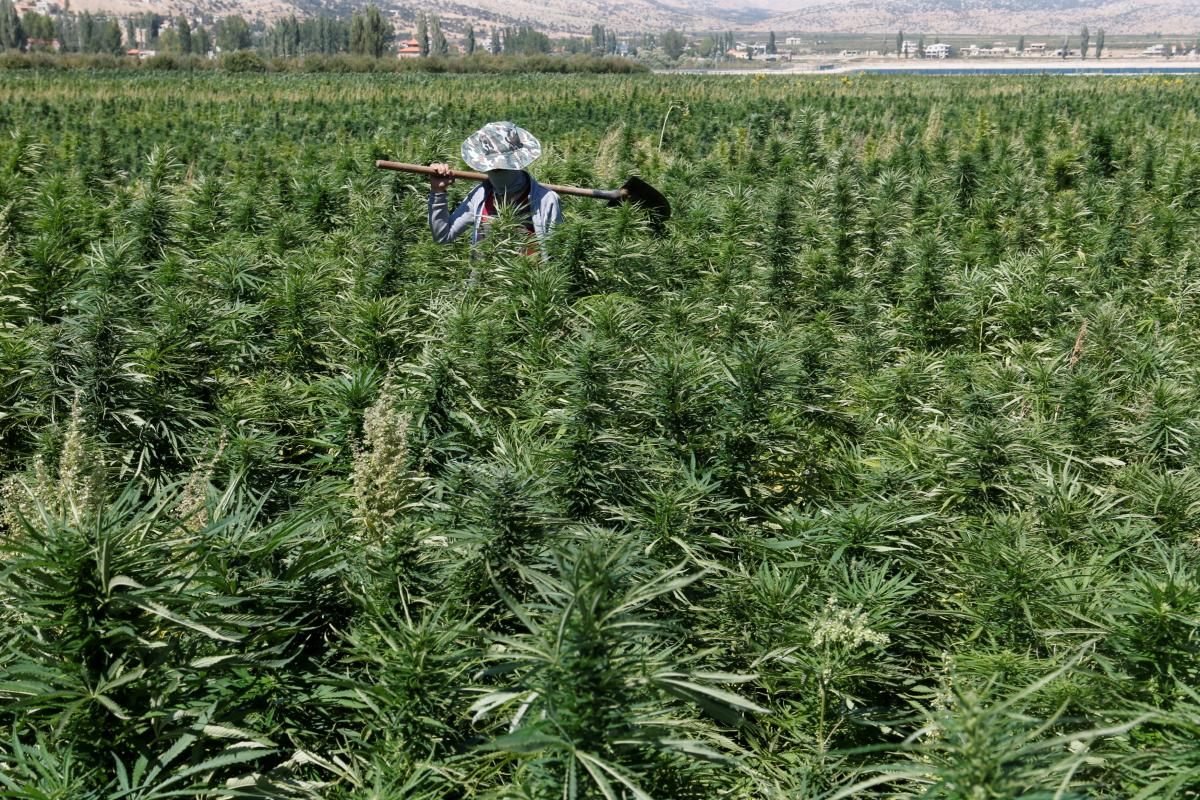 Israel approves exports of cannabis for medical use – Middle East