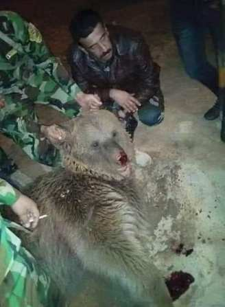Iraq forces have killed an endangered Syrian brown bear while it was sleeping [Facebook]