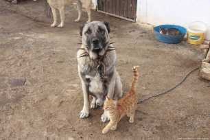 See here how the dogs and cats play together Turkey, 19 November 2018 [Sidar Can Eren/Anadolu Agency]