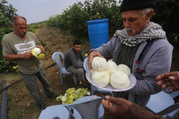 Fruit farmers in Gaza, November, 2018 [Mohammed Asad/Middle East Monitor]