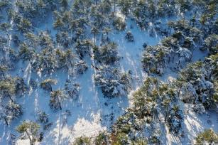 A drone photo shows herd of horses who forage on snow covered Yaylacik forest in Turkey on 2 January 2019 [Alibey Aydın/Anadolu Agency]