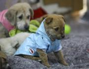Stray puppies are seen at a house, rented by an animal lover Volkan Koc for 29 stray dogs to take shelter during night and cold weather, in Ankara on 10 January 2019 [Halil Sağırkaya/Anadolu Agency]