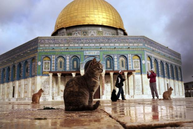 Cats sit near the Dome of the Rock at the Al-Aqsa mosque compound in the Old City on 1 December 2014 in Jerusalem [Spencer Platt/Getty Images]