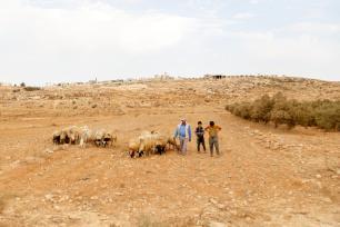 Shepherd walk with his sheep on the outskirts of Susiya