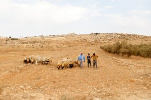 Shepherd walk with his sheep on the outskirts of Susiya