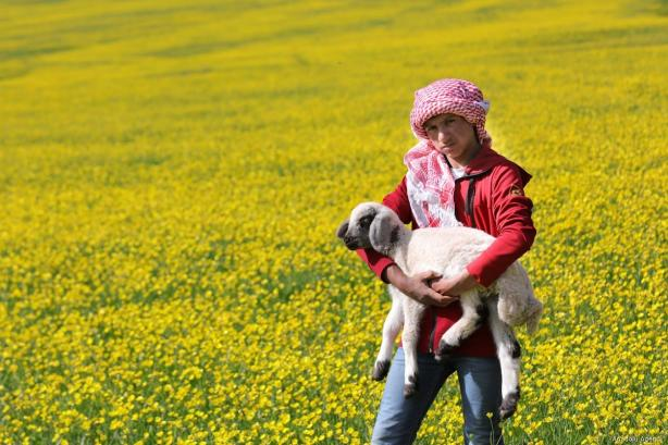 A boy carries a lamb as people collect flowers to use them on Herbed Cheese (also known as 'Otlu Peynir') in Catak district of Turkey's eastern Van province on 26 May, 2019 [Ali İhsan Öztürk/Anadolu Agency]