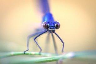 Close-up of a dragonfly sitting on a plant in Van, Turkey on 29 July, 2019 [Özkan Bilgin/Anadolu Agency]