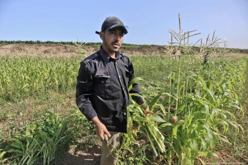 """""""I keep one eye on my wheat harvest on my farm land, while another on any sudden Israeli leveling operations by military tractor,"""" Abdullah Attar, wheat farmer, Beit Lahia, in the northern Gaza Strip [Mohammed Asad/Middle East Monitor]"""