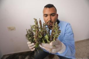Despite Israel banning the apparatus needed to distil the oils from entering Gaza, Fida Abu Elian has found a way to extract medical oils from natural herbs