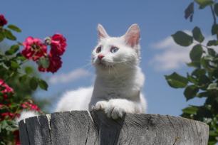 A cat parched on a tree trunk on a warm summers day in Turkey [Özkan Bilgin/Anadolu Agency]